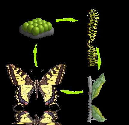 Презентация к исследовательской работе бабочки